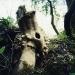 Baumstumpf, Bezonvaux (© Chris Dreier)