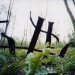 Bezonvaux (zerstörtes Dorf), gesprengte Gleise (© Chris Dreier)